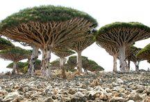 Árvores Incríveis