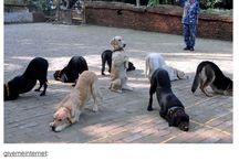Dogs / Aww