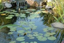 Lago Ornamental - Vida Ecológica Lagos