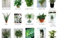 Viherkasvit