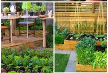 Garden grow / Fruit and vegetable Garden