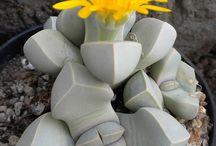 Кактусы и орхидеи и всякие  редкости