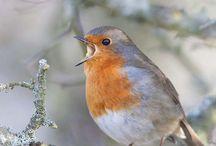 ~Robins Orange Country Life~