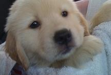 Sofia  born 12/25/2011