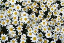 flores e beijaflor