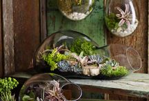 Kamerplanten - House plants