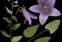 vzory květin na marcipán