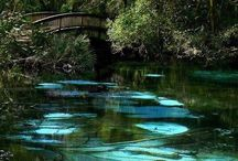 Fabulous Florida Springs / Get out and enjoy Florida's real water parks! Kayaking: Rainbow Springs, Ichetucknee Springs Diving: Peacock and Ginnie Springs Wildlife Watching: Wakulla Spring Glass Bottom Boats: Silver Springs Family Fun: Weeki Wachee Spring Swimming: Jackson Blue, Volusia Blue, Fanning, Ichetucknee, Manatee, Rainbow, Wakulla, Wekiwa  / by Barefoot Sister