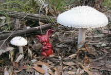 Fungi in my Garden / ll of these pop up in the forest around my studio / by Celtsmith