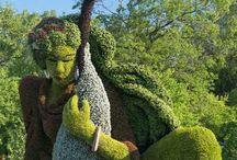 Arte topiaria per giardino