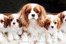 Puppies / by Michelle Koos Pilcher