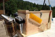 Bienen Bees