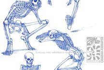 caveiras e esqueletos