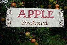 ~ Apple Orchard   ~