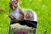 Torte salate / Vegetable cakes / Ricette di torte salate con vegetali, formaggi e farine integrali e biologiche; senza lattosio e senza glutine. Le trovi su: katynabio.blogspot.it