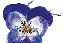 2017 Year of the Pansy / Pansies are such a friendly-faced flower! But I bet you didn't know until the 19th century most people considered them a weed. Today, pansies are a hybrid plant cultivated from those wildflowers in Europe and western Asia. 2017 #YearofthePansy