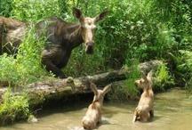 Moose / by Jill Moosekian