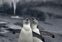 Penguins