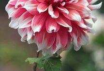 I Love Flowers :-)