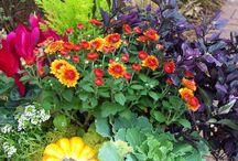 gardening / by Kenra Reed