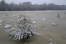 World Wetlands / About wetlands - areas of watersaturated with water either permanently or seasonally