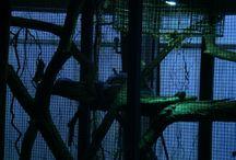 Anakonda / Sieht hiemand 8,85M?Wieviel reden einfach so bei der Begenung. Hat das eine Schlange und jedes Tier verdient?