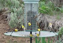 Bird Feeder Accessories / Bird Feeding ideas