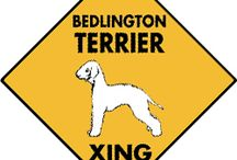Bedlington Terrier Signs and Pictures / Warning and Caution Bedlington Terrier Signs. https://www.signswithanattitude.com/bedlington-terrier-signs.html
