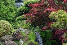 Yard - Japanese Gardening & Maples
