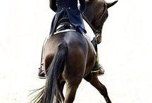 Horses - dressage - Выездка