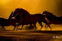 my favorite animals / by Terri Owens
