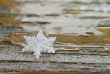 winter / by Tricia Everett