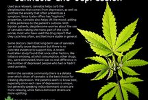 Strains / Kannabislajikkeet