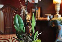 Orkidér