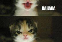 funny cats / funny cats