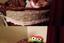Gatos / Todo de gatos