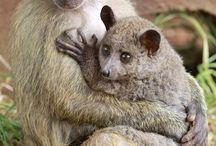ODD FRIENDSHIPS / Animals
