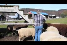 Diemand Farm Story