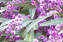 το λουλούδι που ανθίζει καταχείμωνο