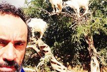 Marocco / Capre sugli alberi