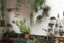 walls, floors and plants