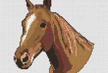 haft konie