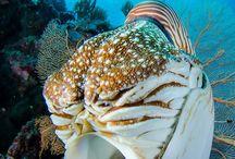 Inpiration - sea creatures