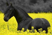 Lovak / Imádom a lovakat
