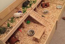 Vše pro morčátka :-)