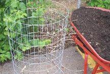 Growing Veggies