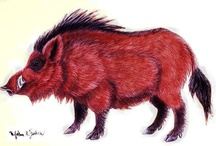 Razorbacks / by Scott Stockburger