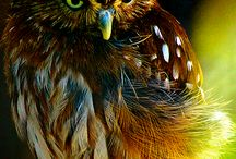 Whoooo are you? / by Diane H