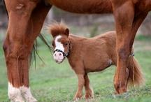 Horses ~ I grew up on them and miss them terribly...