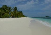 Maldive Passion